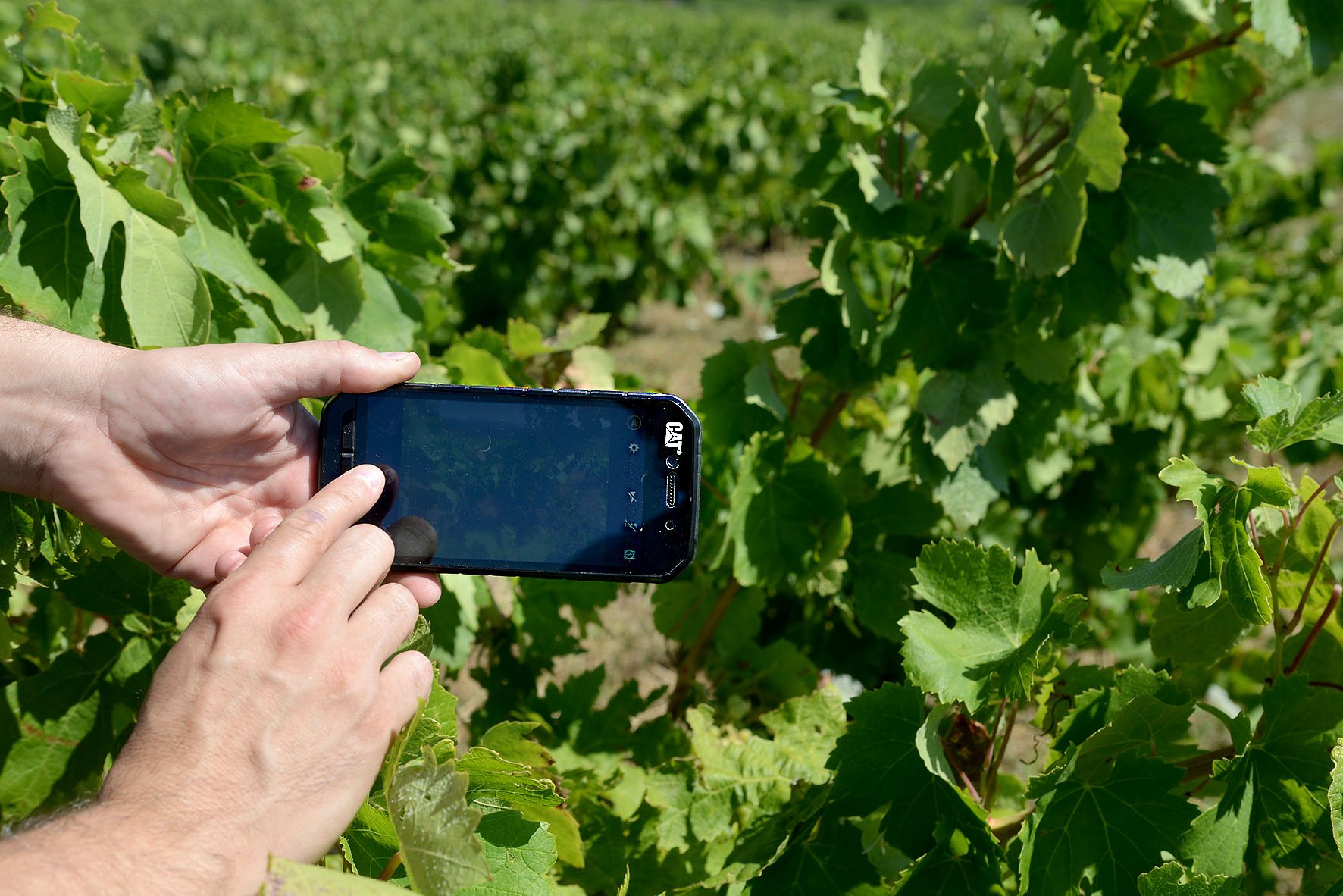 The Cat S41 smartphone in use in a winery | Cat phones